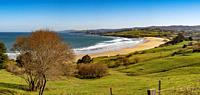 Meadow of fresh green grass. Oyambre beach, Comillas. Cantabrian Sea. Cantabria Spain. Europe.