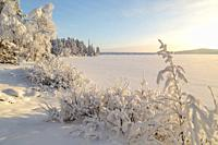 Landscape in winter season, nice warm afternoon light, snowy trees, mountain in background, Gällivare county, Swedish Lapland, Sweden.