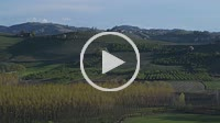 Moving view on the green vineyards and woods of the Langhe Piedmont Italy, the sky and blue