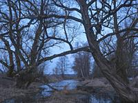 poland. Podlasie region. Very early spring in marsh land. Moonrise