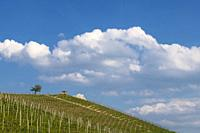 View of the winding hills over the vineyards and clouds in the Langhe Piedmont, the sky is blue, on the top a tree and a small house.