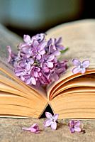 Lilac flowers with open old book.