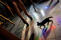 A pet kitten walks next to a sex worker wearing high heels shoes in a sex club in San Salvador, El Salvador, 13 November 2016. Sex workersâ. . task in...