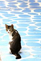 Rear view of a tabby cat sitting on a colorfully painted floor in Greece and looking back at camera.