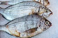 Bream on ice on display in fish shop / fish market