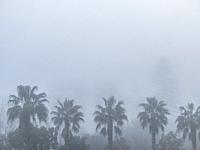 Grey landscape in morning mist.