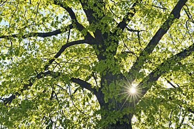 Close up of tree with sun and sunbeams in spring. Bavaria, Germany.