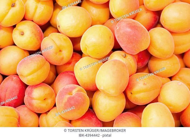 Fresh apricots at market stall, Bremen, Germany