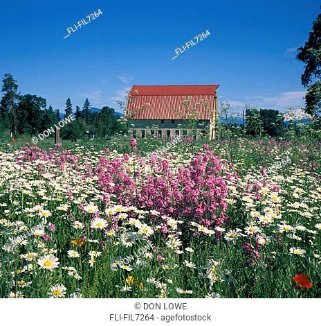 Barn and Wildflowers, Hood River, Oregon