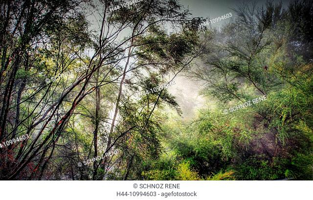 Rotorua, New Zealand, rain forest, fog, vapor, hot springs, Mystical, mood, north island, trees, plants