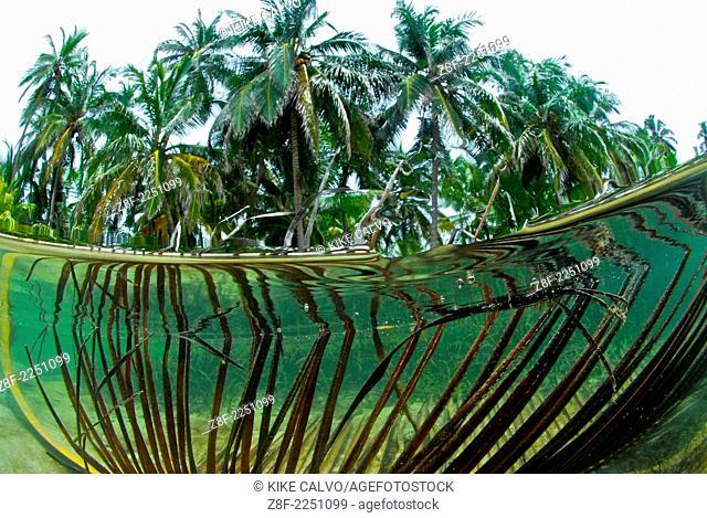 Seagrass underwater. San Blas. Panama