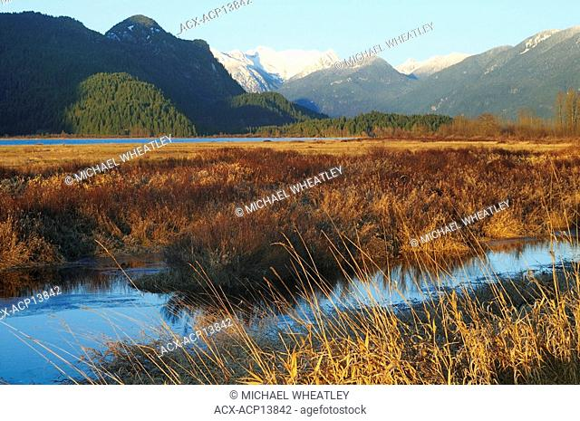 Grant Narrows, Grant Narrows Regional Park, Pitt Meadows, British Columbia