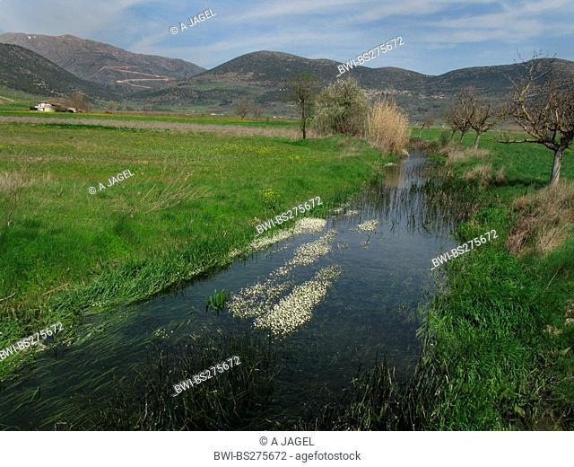 river water-crowfoot Ranunculus fluitans, river with river water-crowfoot in Arcadia, Greece, Peloponnes