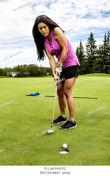 A female golfer sinks a putt into a hole on a golf course with the flag laying on the green behind her; Edmonton, Alberta, Canada