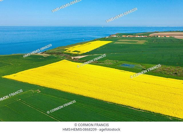 France, Pas de Calais, Audinghen, rapeseed field by the sea (aerial view)