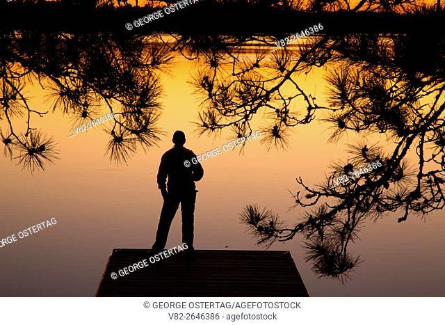 Dock sunrise with pine on Kabetogama Lake at Ash River, Voyageurs National Park, Minnesota