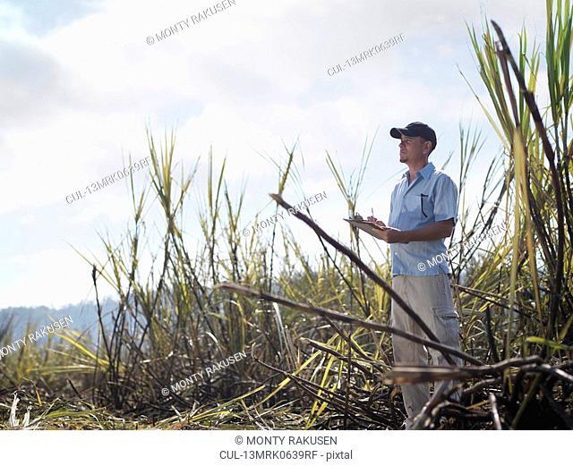 Man With Clipboard In Sugar Cane