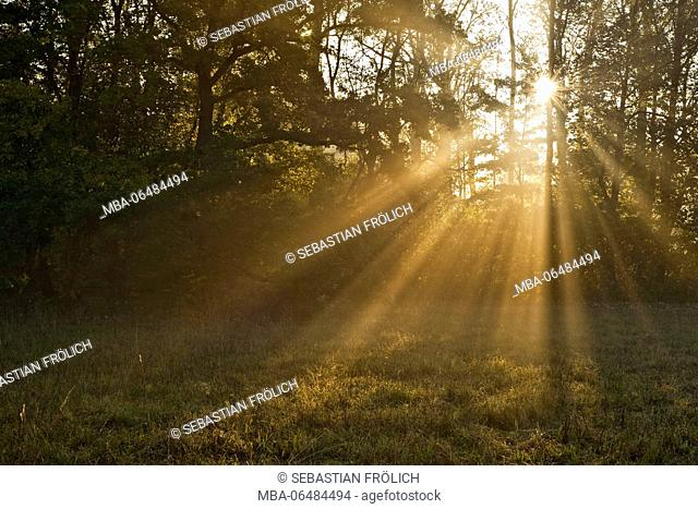 The sun breaks by the forks of a wood on a small meadow in the foreground
