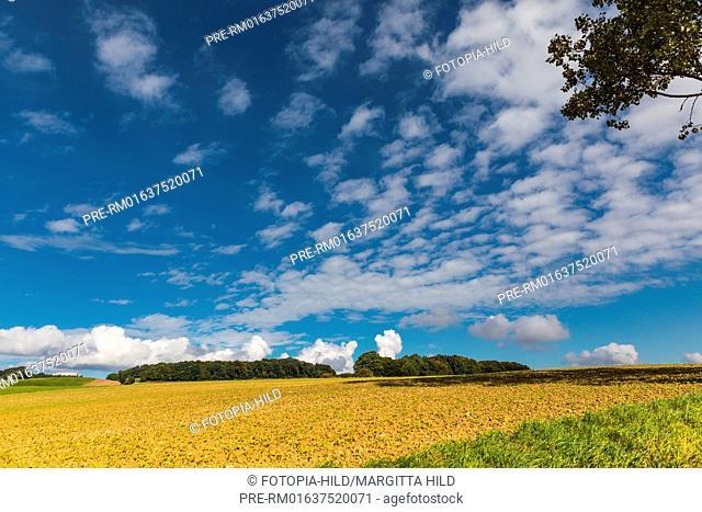 Landscape at Barterode, Flecken Adelebsen, Naturraum Sollingvorland, Landkreis Göttingen, Niedersachsen, Germany, HDR / Feldlandschaft in Barterode