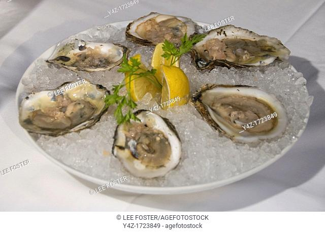 Washington DC, USA, restaurant DC Coast, a fine dining place. Dish of iced blue point oysters