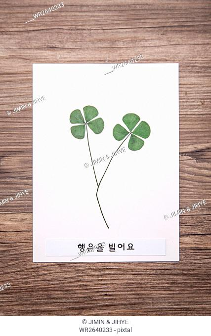 Four-leaf clovers and message of fortune