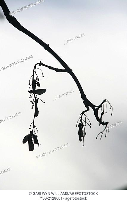 seeds on bare tree branches