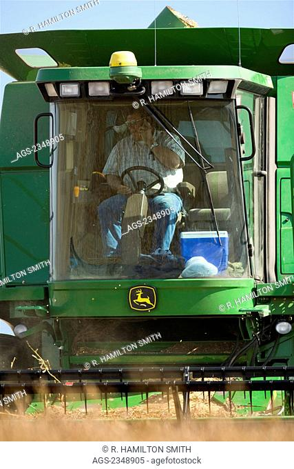 Agriculture - A farmer talks on his cell phone in the cab of a combine while harvesting soybeans / near Northland, Minnesota, USA