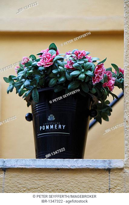 Rhododendrons in black Pommery Champagne cooler
