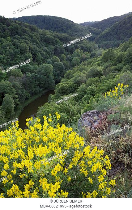 Flowers, valley, wood, river, hill