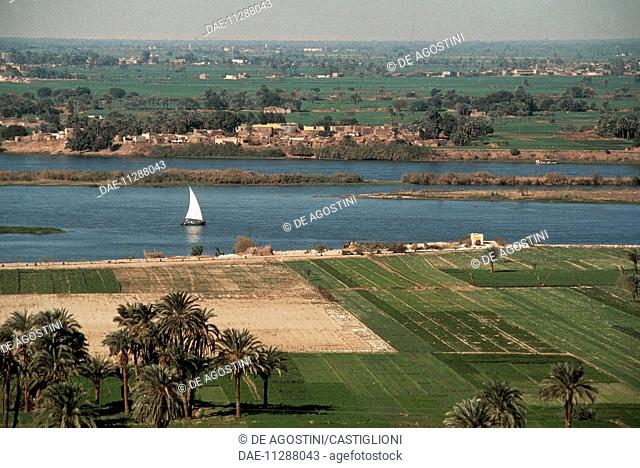 Palm trees on the Nile river, Minieh region, Egypt