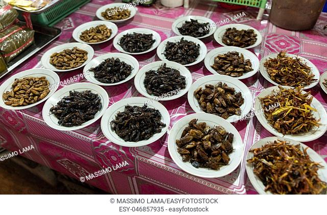 insects exposed in makai market, Vientiane, Laos