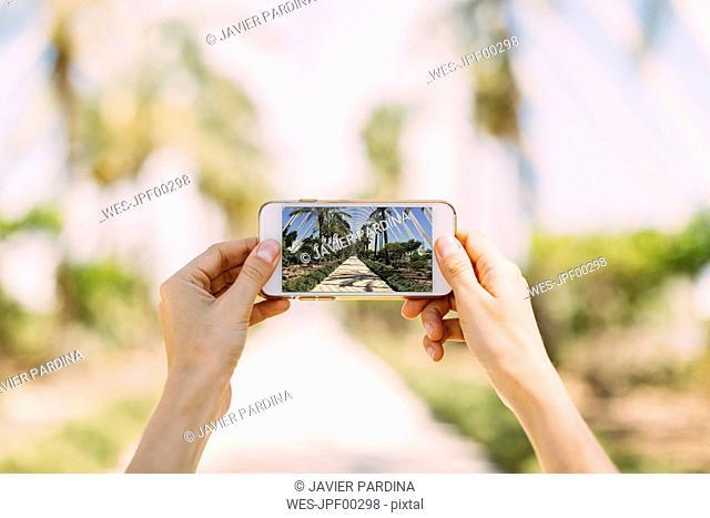 Spain, Valencia, Ciudad de las Artes y de Las Ciencias, L'Umbracle, woman taking cell phone picture at palm garden