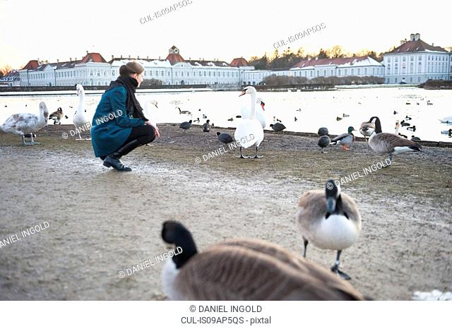 Mid adult woman crouching in park watching swans, Munich, Germany