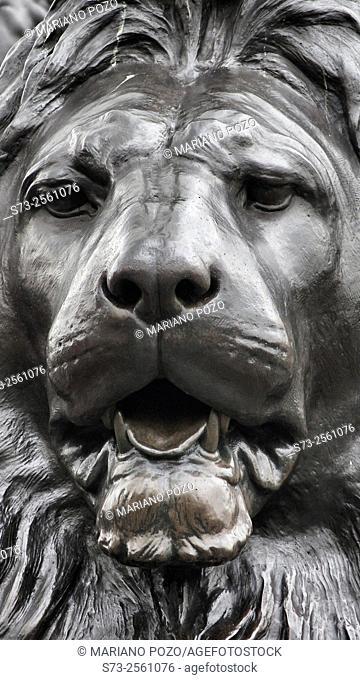 Lion sculpture at Trafalgar Square in London, United Kingdom