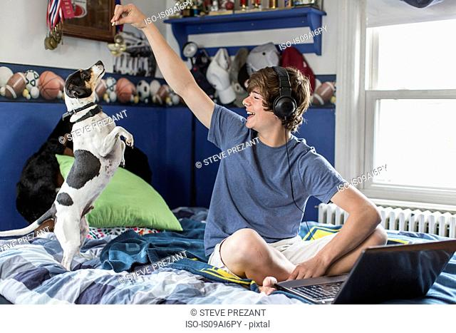 Teenage boy sitting on bed with laptop computer, playing with dog