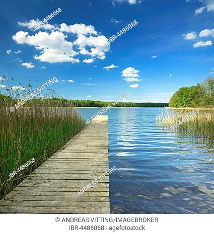 Bathing spot with Boardwalk, Clear Lake with reeds and forest, Big Krinertsee, biosphere reserve Schorfheide-Chorin, Brandenburg, Germany