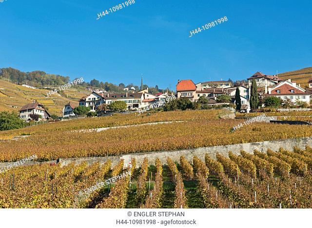 wine cultivation in Riex in the canton of Vaud