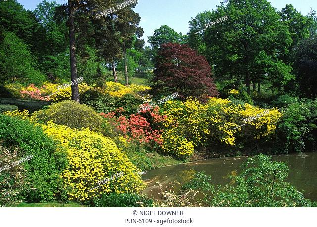 Wide-angle view of Leonardslee gardens across the lake towards a range of colourful flowering shrubs including rhododendrons