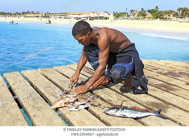 Local fisherman gutting and cleaning freshly caught fish on the pier at Santa Maria, Sal Island, Salinas, Cape Verde, Africa