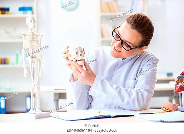 Woman doctor studying human skeleton