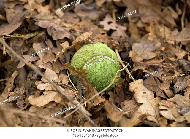 Tennis ball lost amoungst the autumn leaf fall