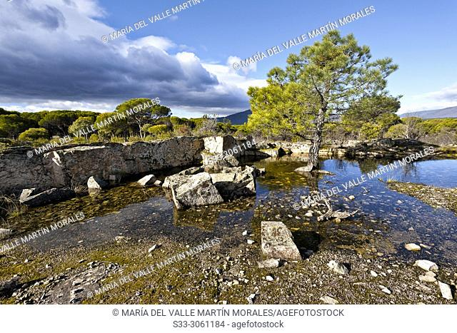 Puddles, pines and granite in The Piquillo on a cloudy day. Madrid. Spain