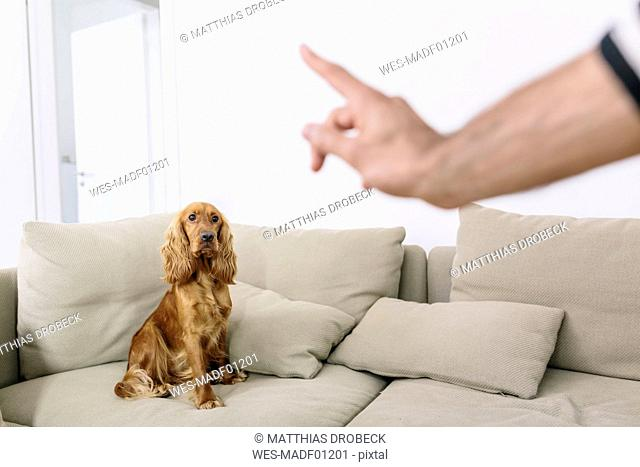 Man teaching dog at home