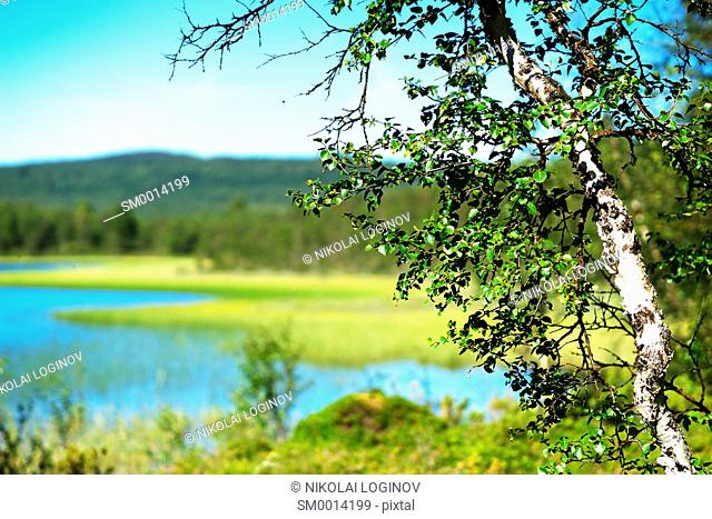 Birch tree bokeh lake landscape background hd