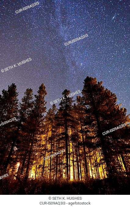 Trees and starry sky, low angle view, Lake Louise, Alberta, Canada