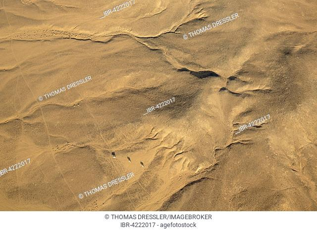 Gemsboks or gemsbucks (Oryx gazella), on arid desert plain in Namib Desert, aerial view, Namib-Naukluft National Park, Namibia