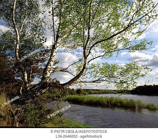Spring on Bug river. Podlasie region. Eastern Poland