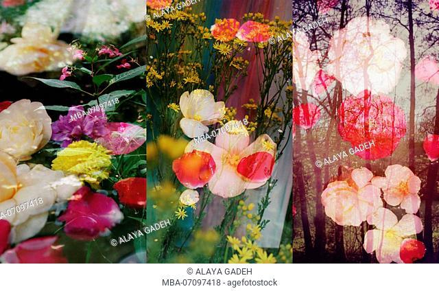 photomontage, flowers, flowers, shrubs, detail, blur
