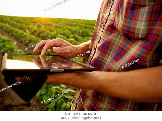 Agriculture - A young farmer in an early growth soybean field at sunset records crop data on his Apple iPad. This represents the next generation of young...