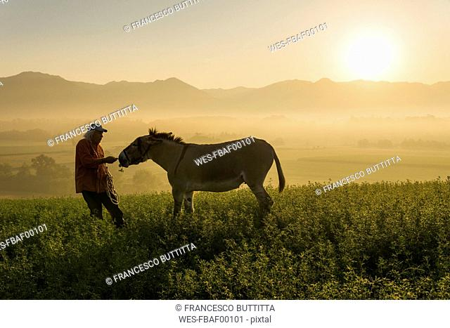 Italy, Tuscany, Borgo San Lorenzo, senior man feeding donkey in field at sunrise above rural landscape